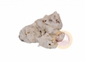Ořechové hrudky 1106
